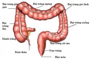 Ruột non tiêu hóa thức ăn thành các chất dinh dưỡng để nuôi cơ thể khỏe mạnh