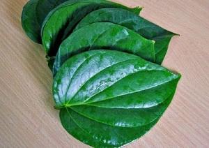 Các bài thuốc chua benh tri với lá trầu không