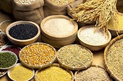 Ngũ cốc nguyên hạt chứa hàm lượng chất xơ rất cao
