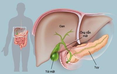 Cách xử lý sau khi vô tình tiếp xúc với virus viêm gan B