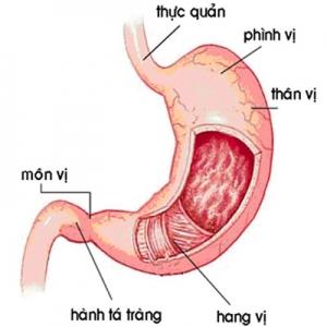 Các bệnh của ruột non (Tiếp theo)