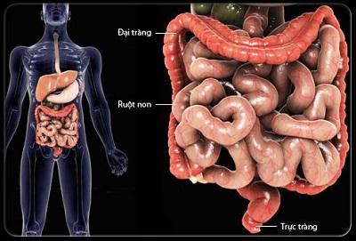 U của ruột non